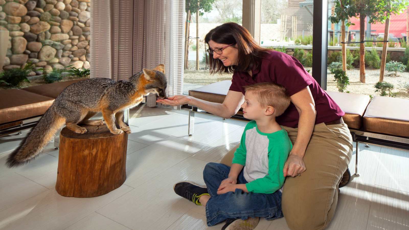 Experience Wildlife - Fox Encounter Lobby